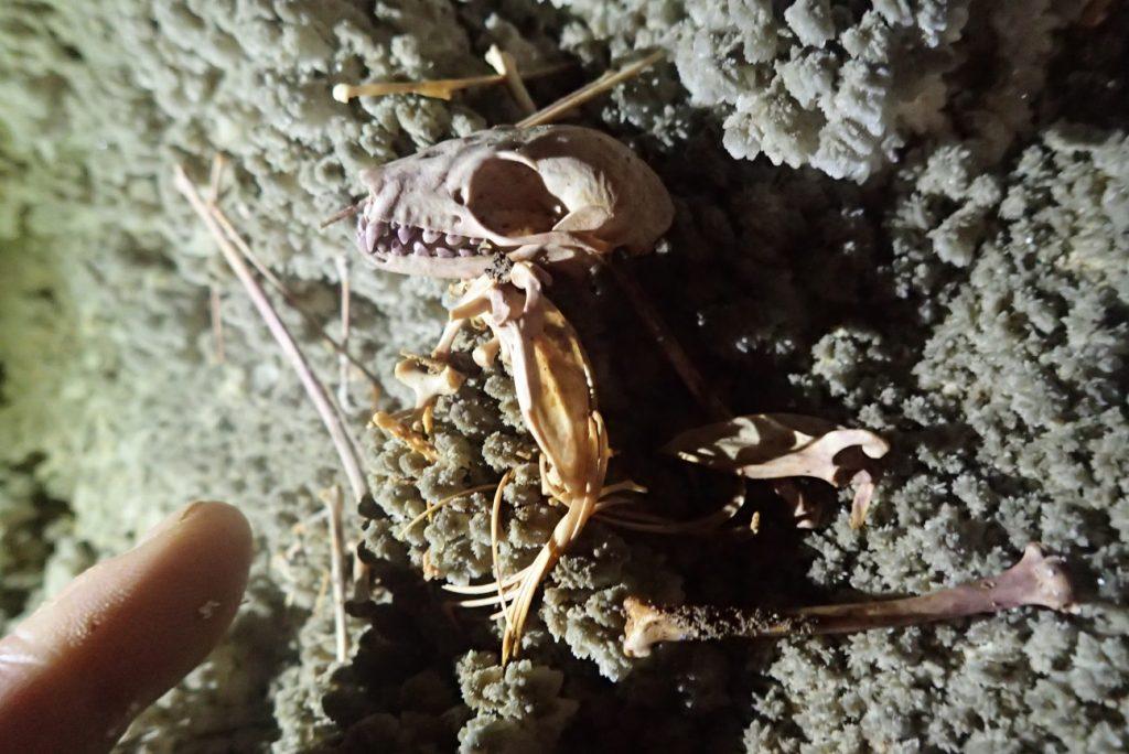 2018年未踏の洞窟探検~ラオス コウモリの骨
